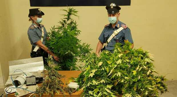 Pomezia, nascondeva nel box una serra di marjiuana: arrestato un 34enne