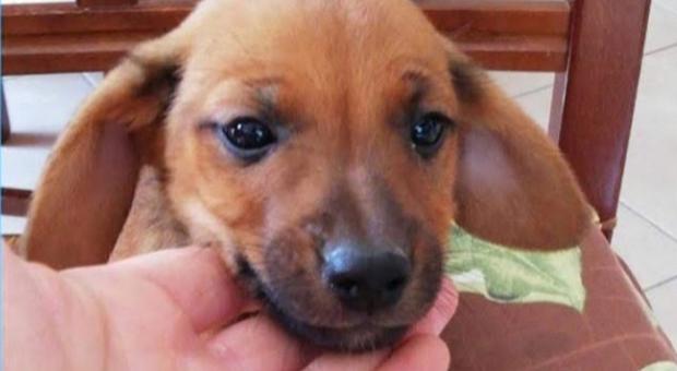 Uccisa a bastonate Candy, la cagnolina che faceva compagnia alla padrona malata