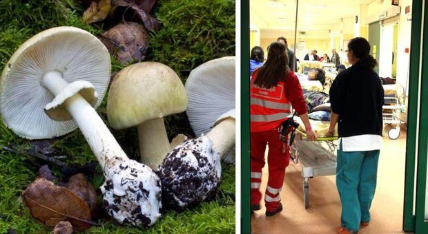 Terni, mangia risotto con funghi velenosi e muore dopo 7 giorni di agonia: marito gravissimo