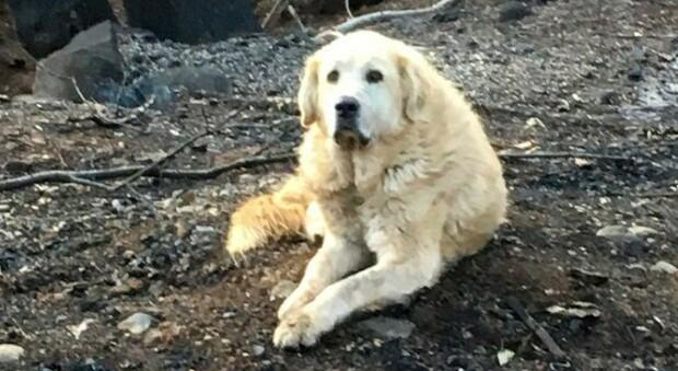 «Un'ondata di cani morti in città»: choc in Pennsylvania, indagini in corso della polizia