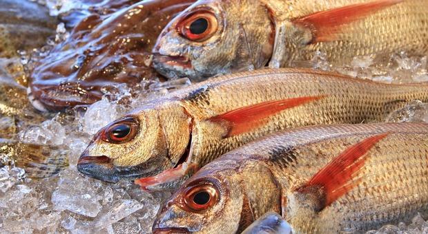 Il cambiamento climatico modifica la qualità nutrizionale del pesce: allarme nei Paesi tropicali