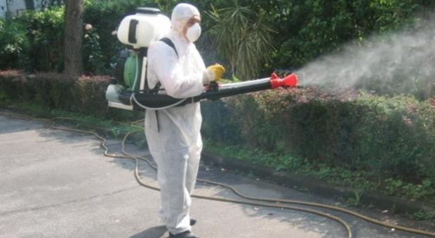 Rieti, martedì 17 disinfestazione contro insetti nocivi: ecco dove
