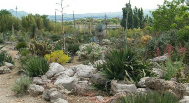 Orto botanico Unitus: il deserto