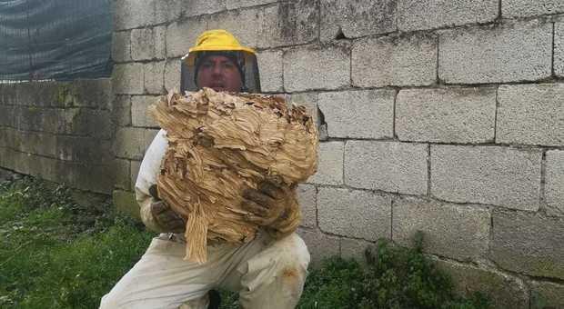 Bambini giocano nel giardino di casa e spunta un nido di calabroni gigante