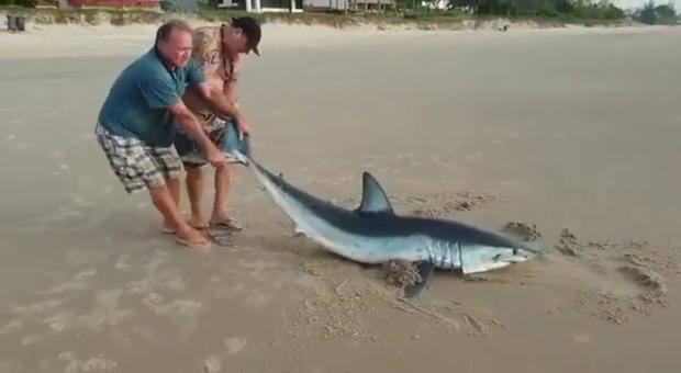Lo squalo nuota vicino alla riva. Invece di allontanarlo lo tirano a secco e lo lasciano morire soffocato (immagini e video pubblicati da Ocean Defender-Brasil)