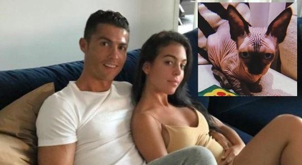 Cristiano Ronaldo, il gatto di CR7 Georgina investito da un'auto: «Un mese e mezzo in terapia intensiva»