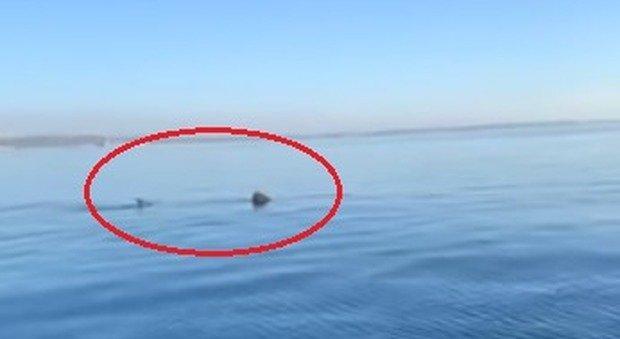 Squalo elefante di otto metri avvistato in Salento: il video ripreso dai pescatori