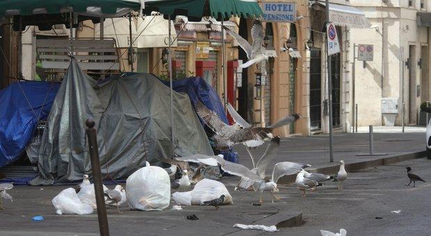 Roma, centro deserto ma più sporco: gabbiani e topi tra l'immondizia