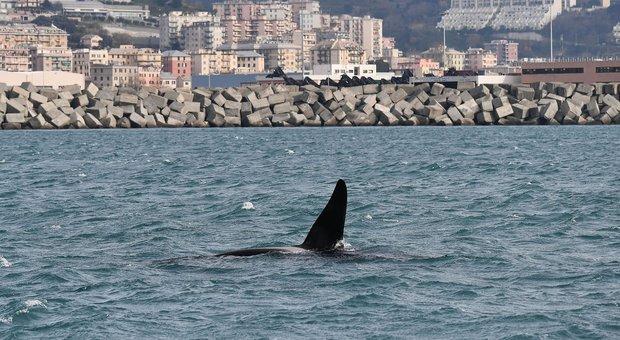 Orche hanno lasciato il porto di Genova: «Si dirigono verso Ovest»