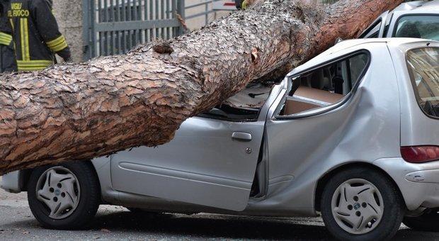 Roma, emergenza alberi: «Malati due su tre». Ecco le zone a rischio