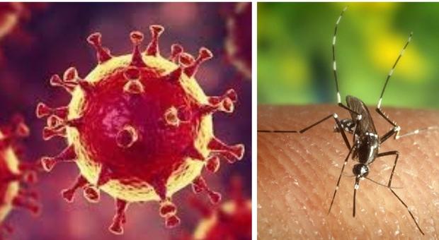 Coronavirus, gli scienziati: «La zanzara non è un vettore, ma meglio evitare di essere punti»