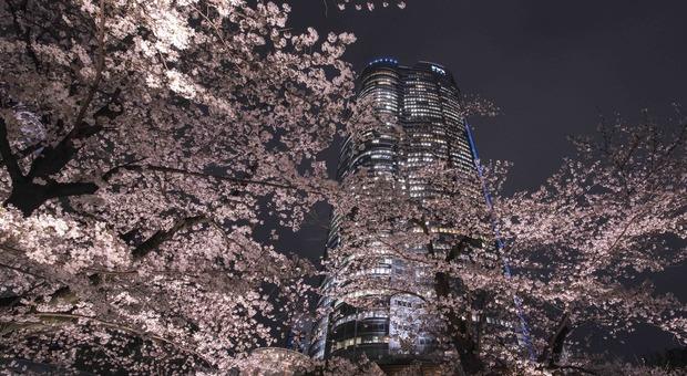 Roppongi Hills a Tokyo (crediti TCVB)