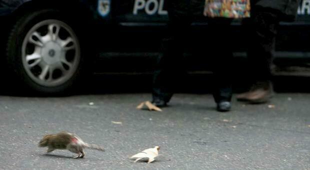 Usa, entra in macchina ma la trova invasa dai ratti: «Forse colpa del Covid»