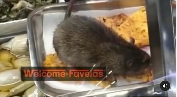 Roma, topo mangia il cibo nel bancone della tavola calda Video