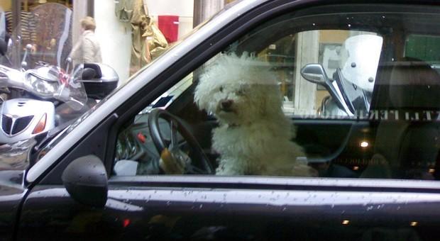 Viaggiare con Fido sul taxi? Dal 20 luglio sarà possibile