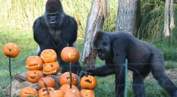Zoo chiusi nel mondo, animali in depressione per l'assenza di visitatori: così gli etologi li consolano