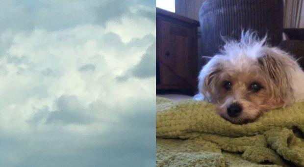 Il suo cane è morto, ma la padrona lo rivede (in cielo) tra le nuvole