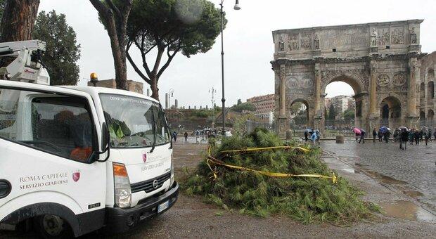 Maltempo Roma, rami caduti e alberi pericolanti in diverse zone: chiuso un tratto di Nomentana