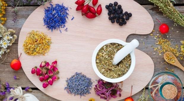 Ribes, perilla, camomilla: i rimedi naturali contro le allergie