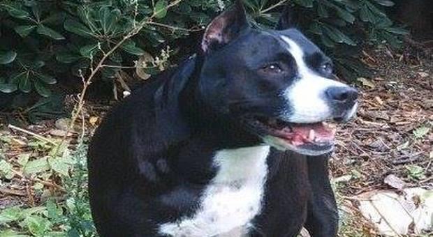 Il suo cane è troppo agitato e nervoso, il padrone lo uccide a coltellate: 38enne denunciato