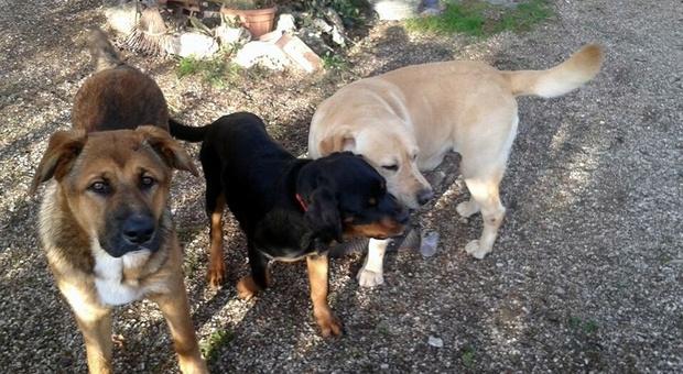 Fiamme in un appartamento in zona Prima Porta, salvati 10 cani