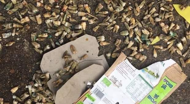 Scoperta choc a Roma: decine di denti umani trovati in strada a Montesacro
