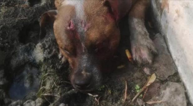 Il povero cane ucciso a Paternò. (immagini diffuse dall'associazione Cuori Randagi su Fb)