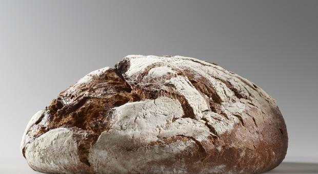 La cottura del pane invecchia le cellule: reazione di Maillard genera acrilamide