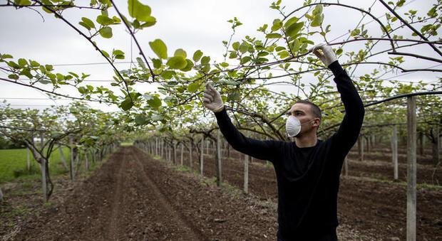 Istat: 385 mila occupati in meno a causa del lockdown per il Coronavirus