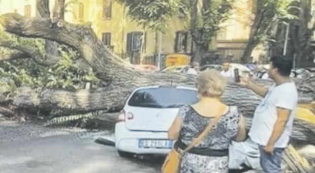 Roma, crolla un albero a Monteverde: paura in strada, danneggiate tre auto in sosta