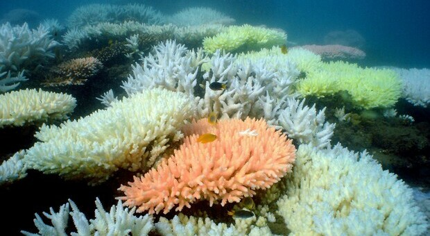 La barriera corallina (immag repertorio Ansa)