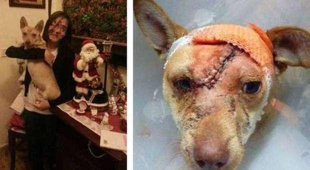 E 39 stato adottato tequila il cane ferito a colpi d 39 ascia for Cane tequila e bonetti