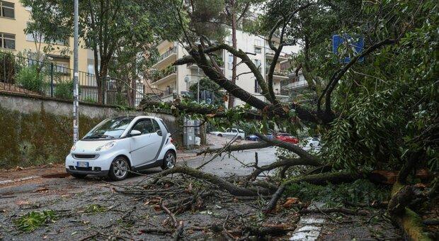 Roma, alberi a rischio crollo. E metà dei giardinieri è esentato dalla potatura