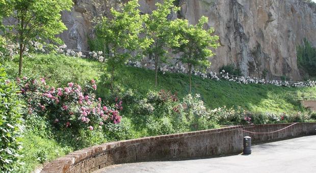 Il Borgo di Rocca Ripesena