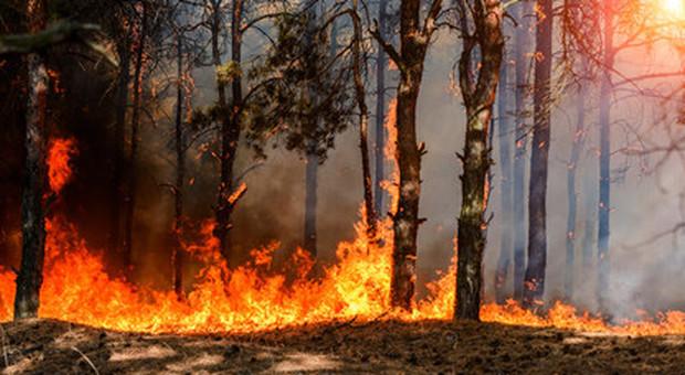 Un brasiliano su due contro Bolsonaro per la deforestazione: apprezzamento al Papa sull'Amazzonia