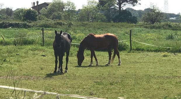 Coronavirus, terapia con i cavalli al Niguarda di Milano contro stress di medici e infermieri