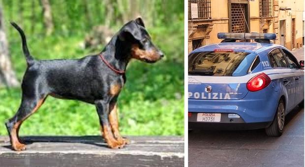 Roma, ubriaco uccide il cane dell'ex e le distrugge la casa: 48enne romano arrestato alla Magliana