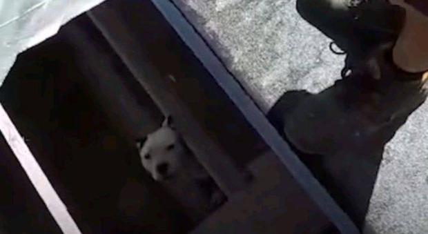 Cucciolo di cane cade in una tomba a Cisterna di Latina, così l'hanno salvato Video