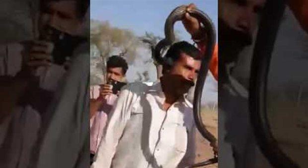 Turista vuole la foto ricordo con il cobra, il serpente lo morde e lui muore