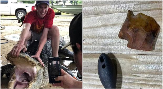Oggetti preistorici (compreso un dardo) trovati nello stomaco di un alligatore: «È l'immagine choc dell'anno»