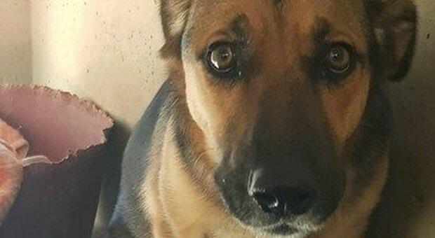 Cani folgorati: ancora un caso al Nord. L'animale ha poggiato la zampa in una pozzanghera