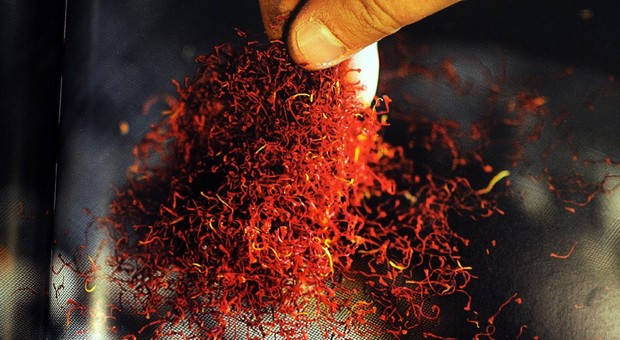 Saffron tablets contain rare visual ailments