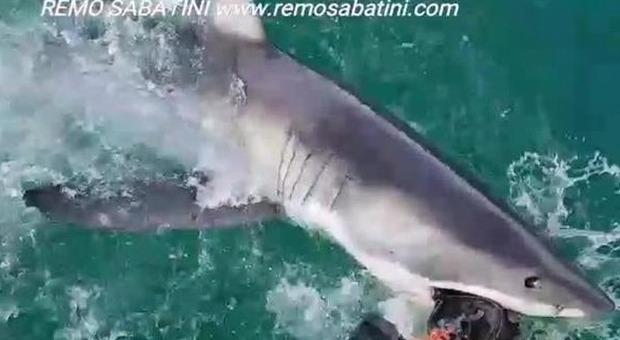 Faccia a faccia con lo squalo bianco: l'incontro è incredibile