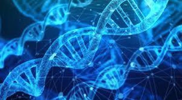 Encode, online il controllore del codice della vita: svelerà l'origine di molte malattie