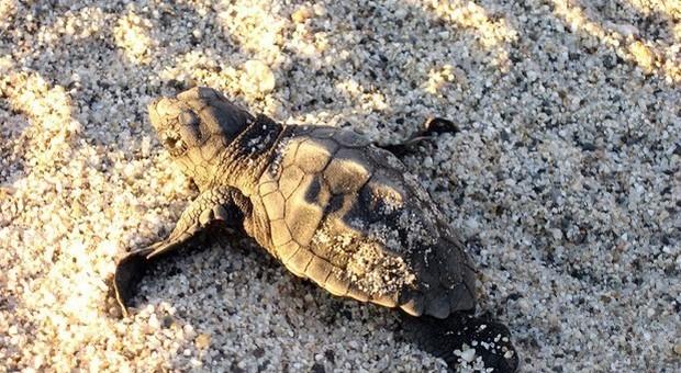 Fanno bere alla neonata beve sangue di tartaruga per proteggerla dal Covid19: la piccola muore in casa