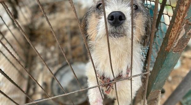 Cento cani salvati dalla macellazione in un allevamento illegale coreano. Le drammatiche immagini