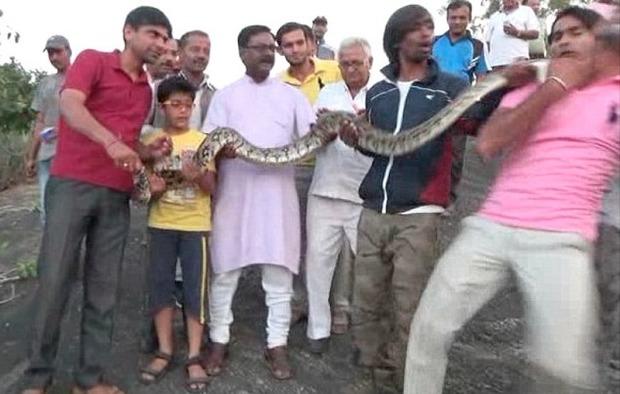 India, tenta di scattarsi un selfie con un grosso pitone: il rettile gli sferra un morso