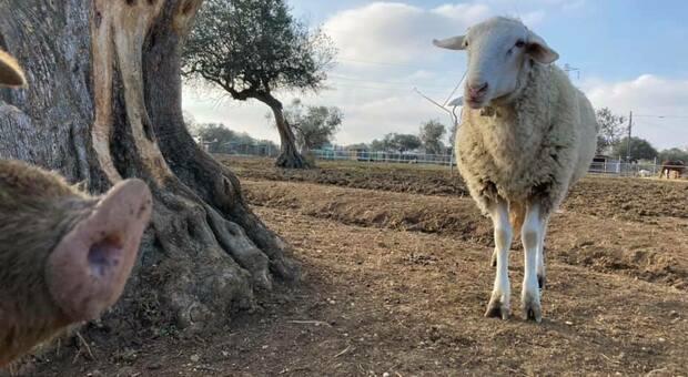 Covid, i rifugi animali maltrattati restano senza fondi: «Ci sosteniamo con gli eventi, rischiamo di chiudere»