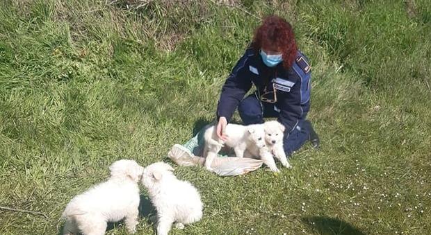 Sutri, salvati cuccioli di cane chiusi in un sacco e abbandonati lungo la Cassia