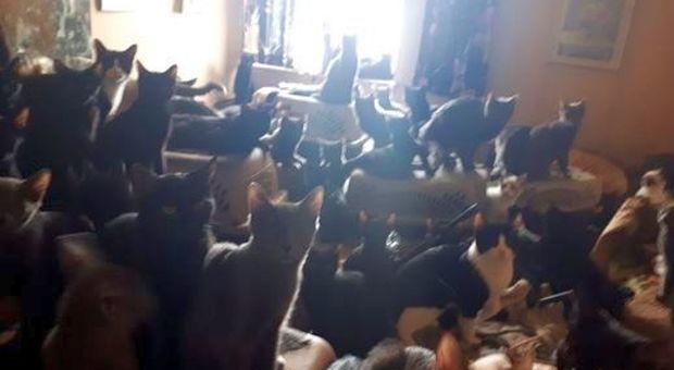 Oltre 300 gatti scoperti in un piccolo appartamento e salvati dai volontari: le foto fanno il giro del mondo